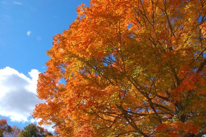 Fall In New England | lookingjoligood.wordpress.com
