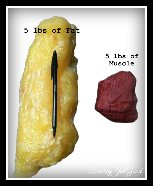 The space taken up by muscle vs fat | lookingjoligood.wordpress.com