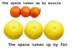The space taken up by muscle vs fat | lookingjoligood.wordpress.com