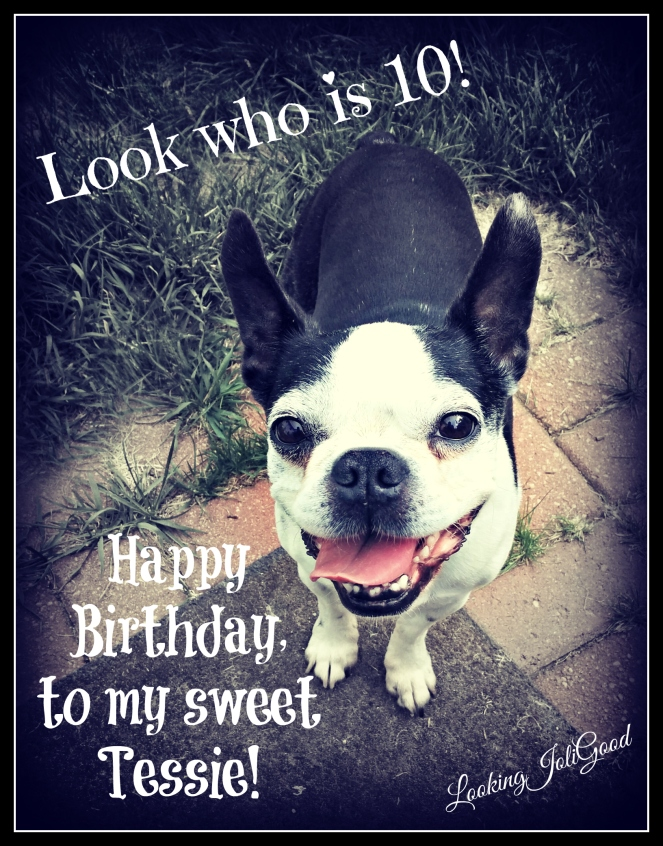 Happy 10th Birthday Tessie! | lookingjoligood.wordpress.com