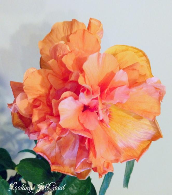 bloomingflower