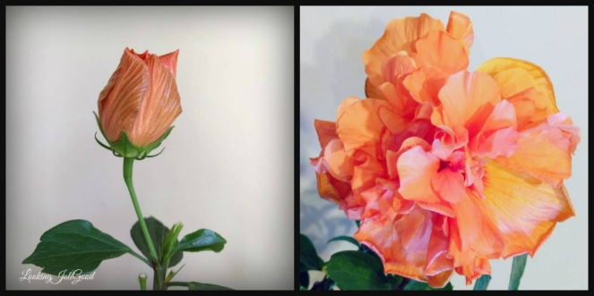 bloom where you are planted   lookingjoligood.wordpress.com