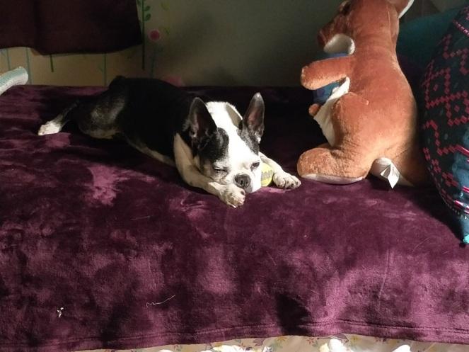 sleepy doggy   lookingjoligood.blog