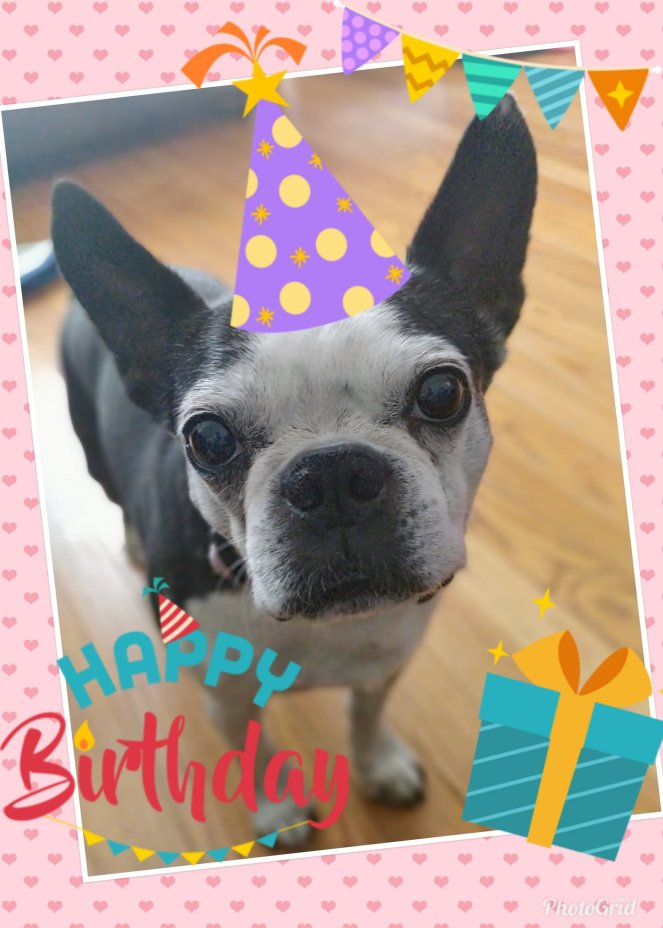 Happy Birthday Tessie | lookingjoligood.blog